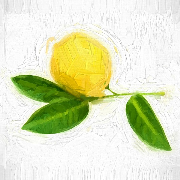 Lemon by A WYN CHANCE