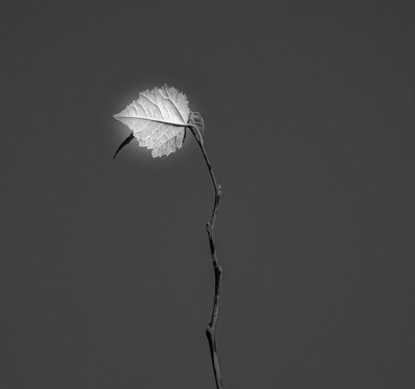 Seul au monde by Anniestpierreartistephotographe