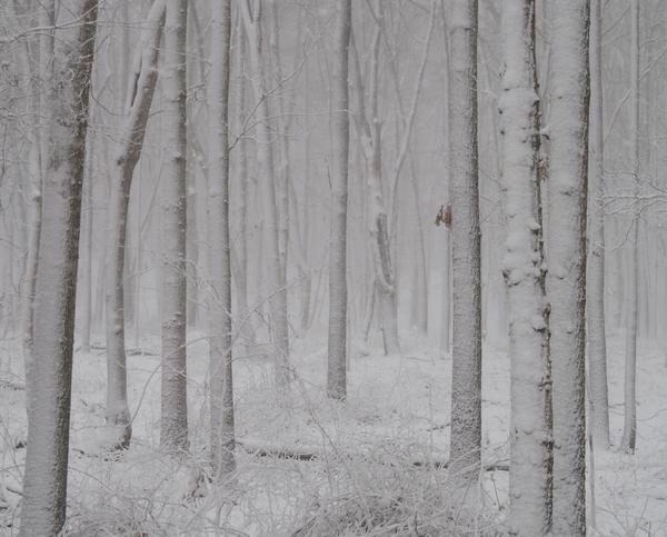 Beech Forest Snow no 2 by Adam M Bundy