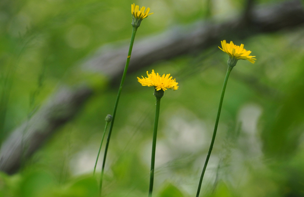 Spring Bloom in the Preserve by Adam M Bundy
