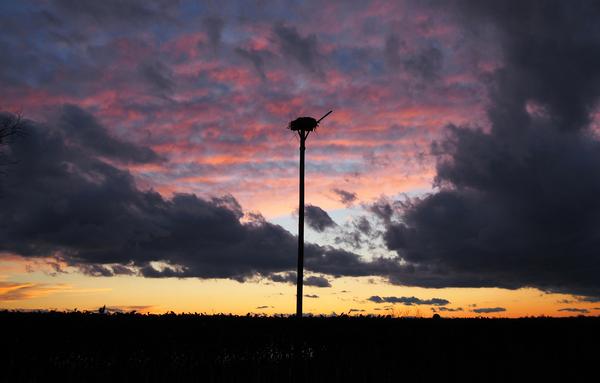 sunset over the Osprey nest by Adam M Bundy