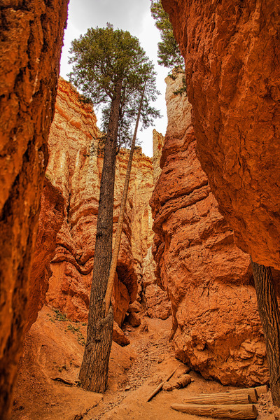 Bryce Canyon by Adventure Photography