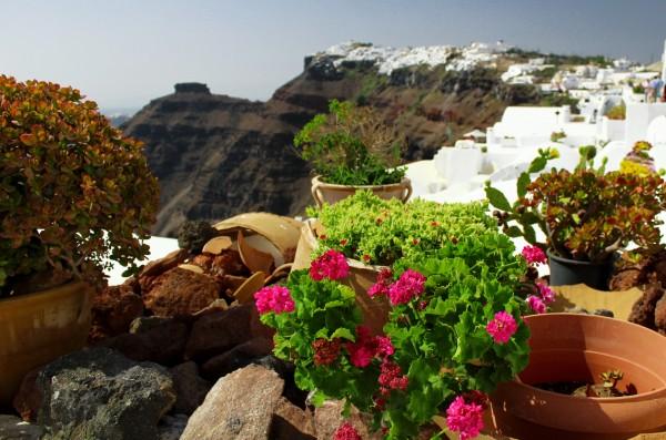 Landscape - Vase of Flowers by Bentivoglio Photography