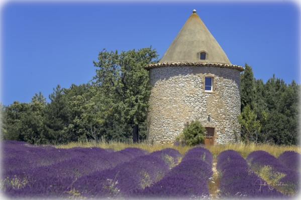 Provence lavande moulin by Alle Christian