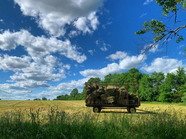 Farm Life  by Andrea Mancuso Photography