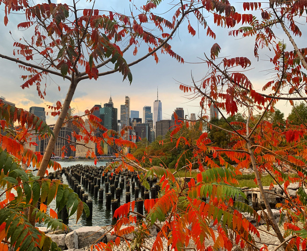 Autumn in New York  by Andrea Mancuso Photography