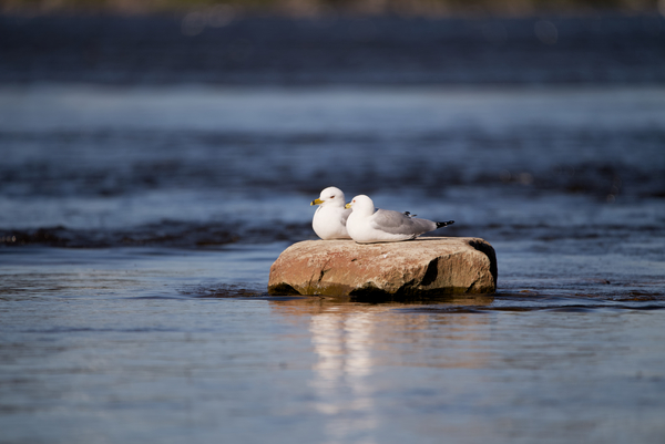 Two birds with one stone by Andy LeBlanc