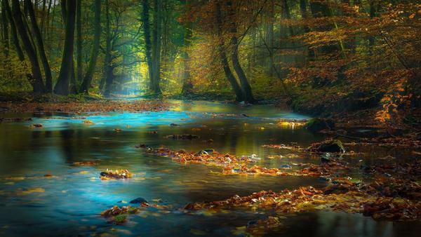 Fallen Leaves Digital Download