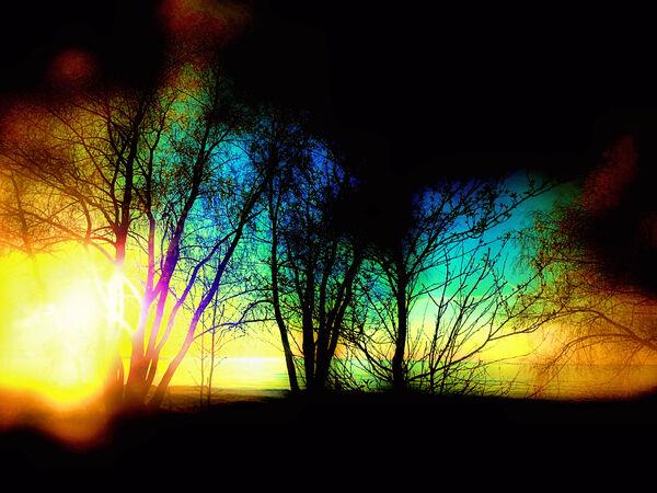 Evening tree Digital Download