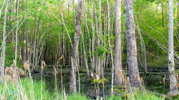 Swamp in Carolina by Anita-Marie