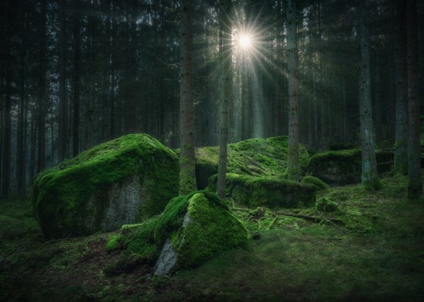 Secret meeting place by Anke Butawitsch