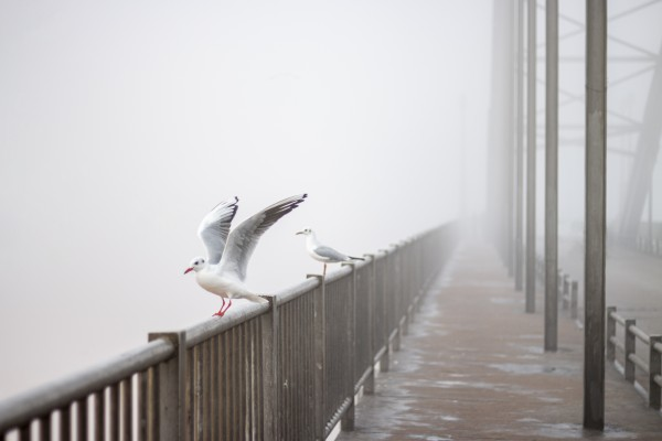 birds on bridge by Arash Azarm