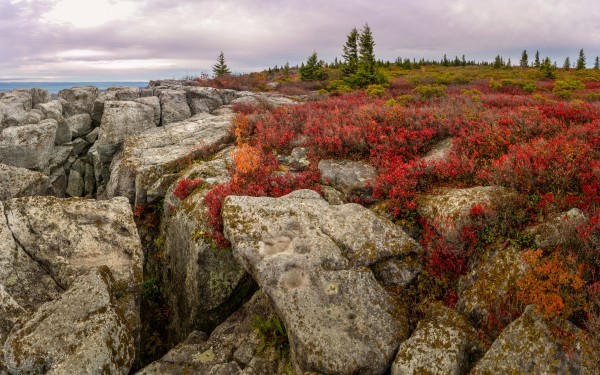 Bear Rocks Preserve apmi 1790 by Artistic Photography