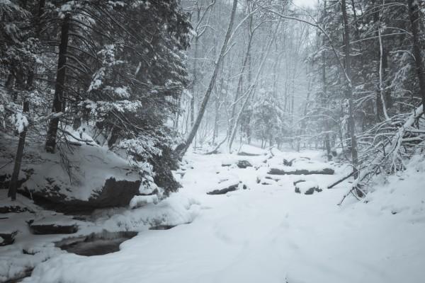 Frozen ap 2042 B&W by Artistic Photography