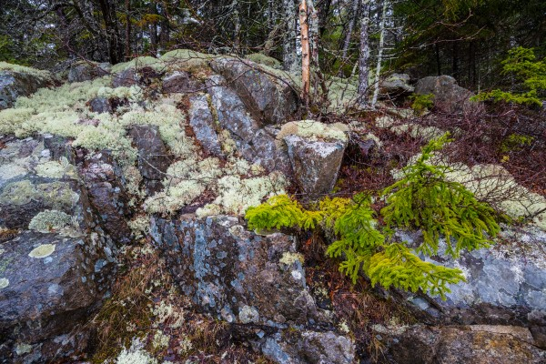 Moss   Lichen ap 2294 by Artistic Photography