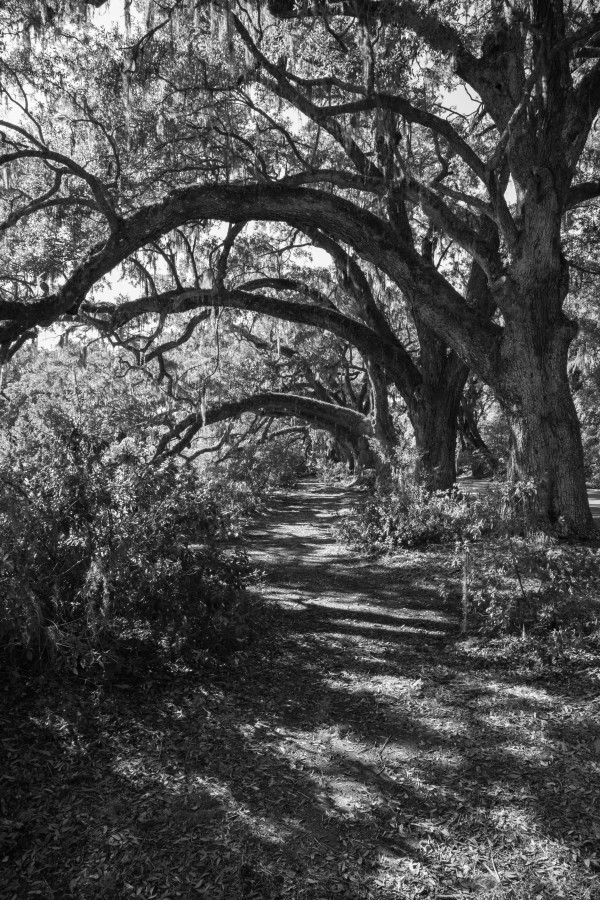 Nature Trail ap 2081 B&W by Artistic Photography
