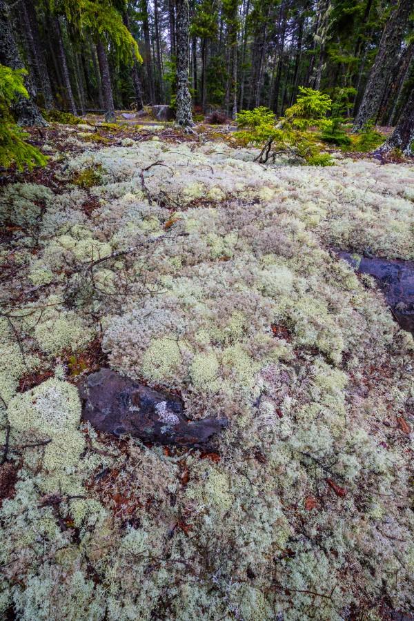 Purple Rocks ap 2276 by Artistic Photography