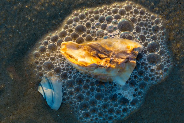 Sea & Shells ap 2140 by Artistic Photography