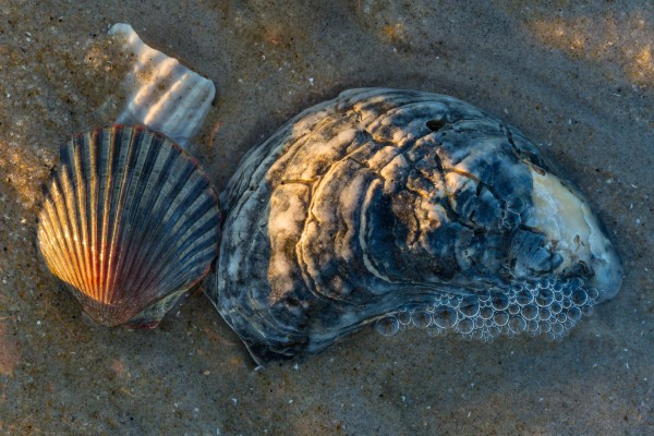 Sea Shells ap 2142 by Artistic Photography