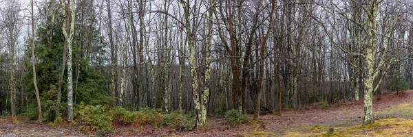 Treeline apmi 1537 by Artistic Photography