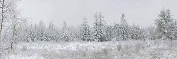 Treeline apmi 1567 60x20 by Artistic Photography