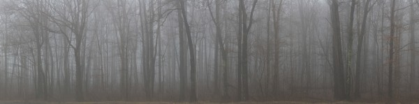 Treeline apmi 1545 by Artistic Photography
