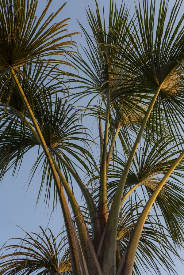Buriti Palms 02 by Augusto Miranda