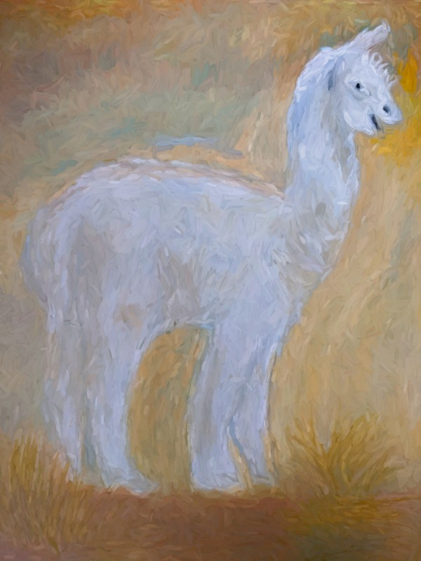 LLama by Aurelia Schanzenbacher Sisters Fine Arts
