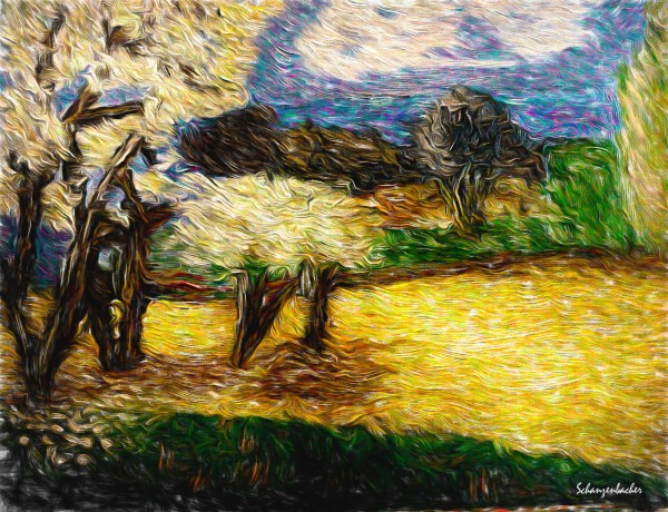 Yellow Summer Fields by Aurelia Schanzenbacher Sisters Fine Arts