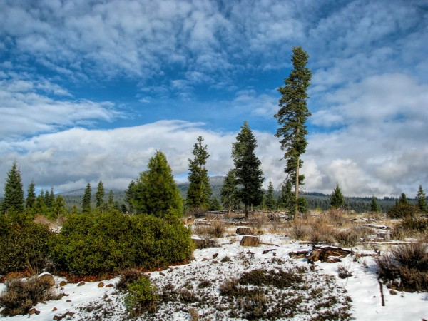 Willow Valley Oregon by Aurelia Schanzenbacher Sisters Fine Arts