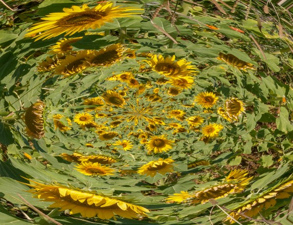 sunflowers vortex by BBS Art