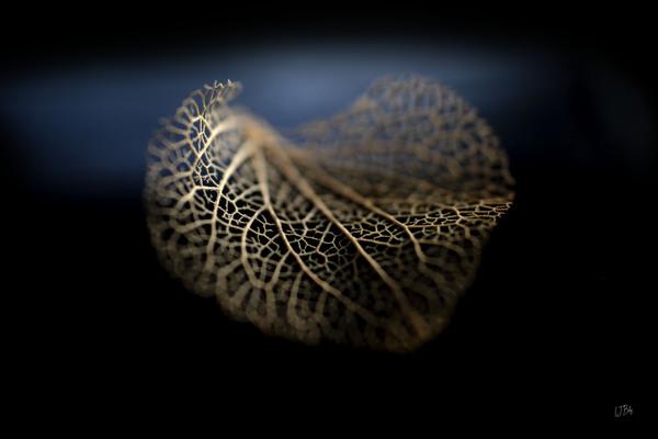 Still life of autumn by BILAS