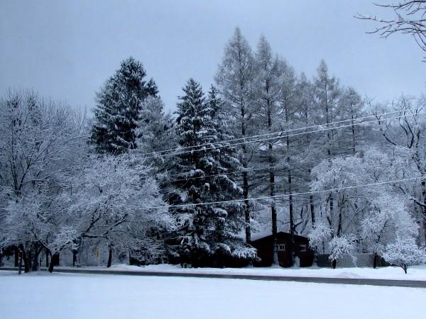 A New York Winter by Battaboom