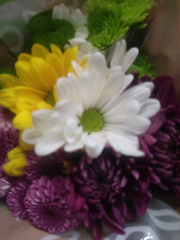 Flowers  by Beholders Eyes