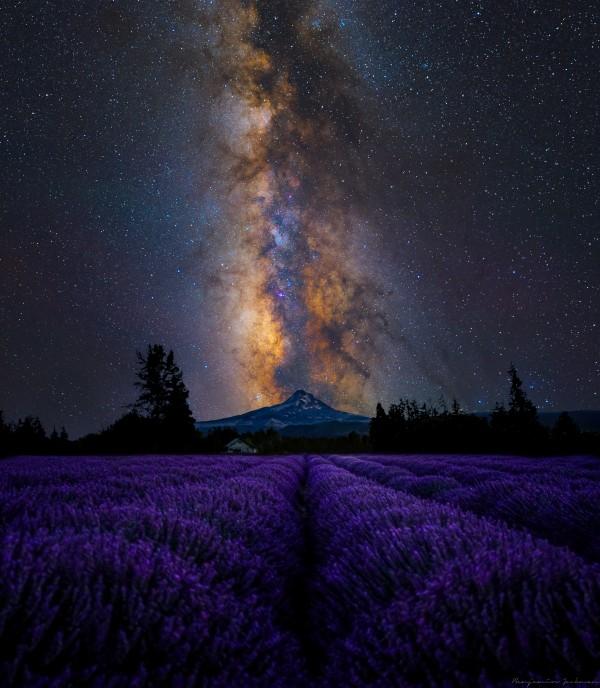 Lavender Valley Digital Download