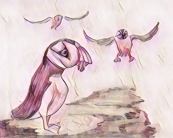 Les macareux  by Biji sylvie faucher