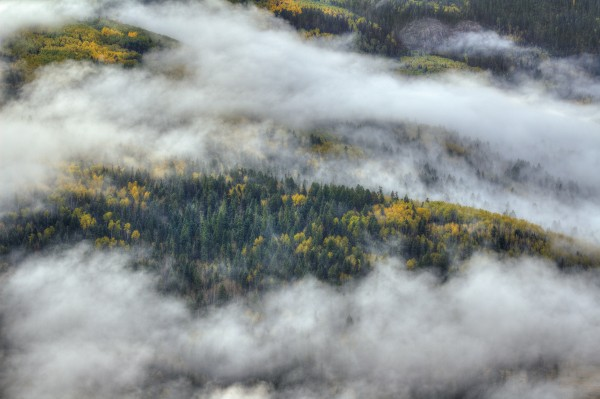 ASPEN FOREST IN THE CLOUDS by Bill Sherrell