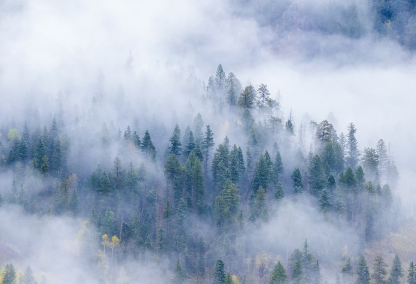 FOREST IN THE CLOUDS by Bill Sherrell