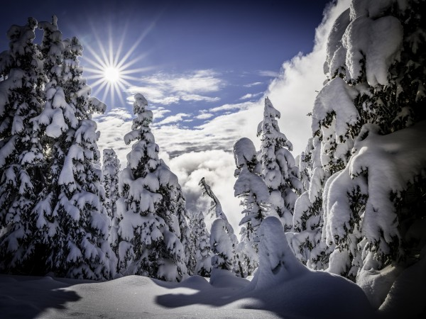 Kootenay Alpine Snow by Billy Stevens media