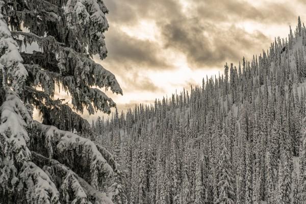 winter sunset by Billy Stevens media