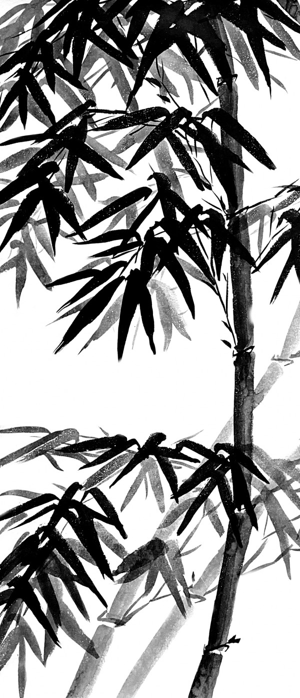 Bamboo - black and white by Birgit Moldenhauer