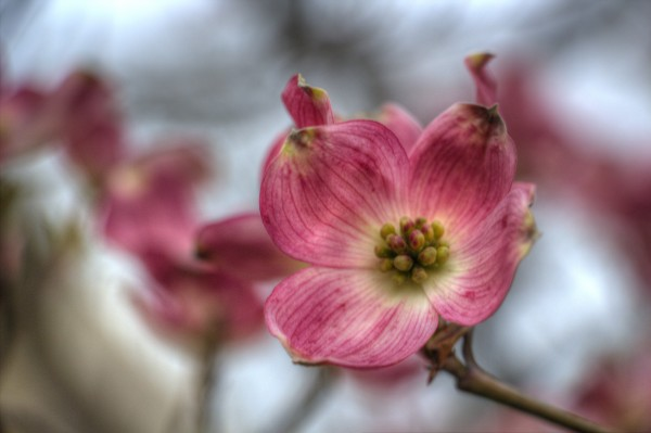 Spring Flowers by Bob Vogt