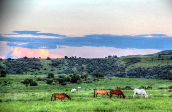 Home on the Range by Bob Vogt