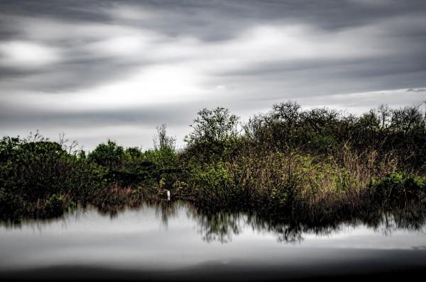 Reflected Earth by Brad Jolly