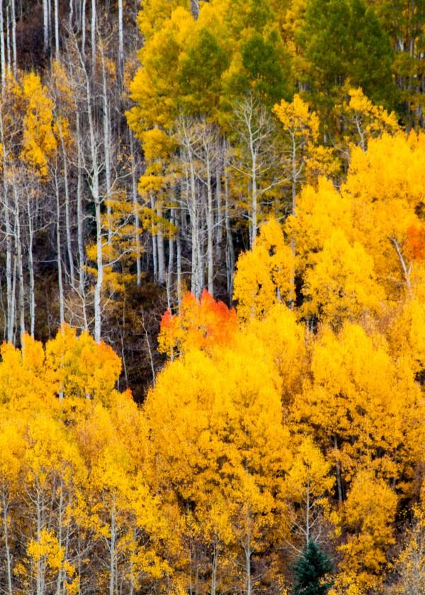 Golden Heights by Brendan McMillan