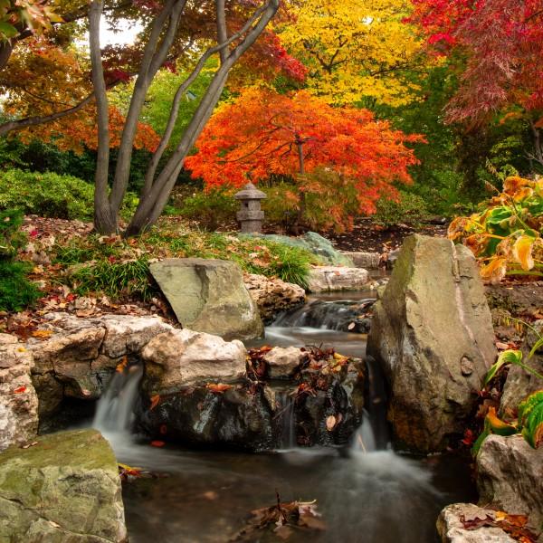 Autumn Garden by Brendan McMillan