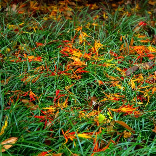 Colored Grass by Brendan McMillan