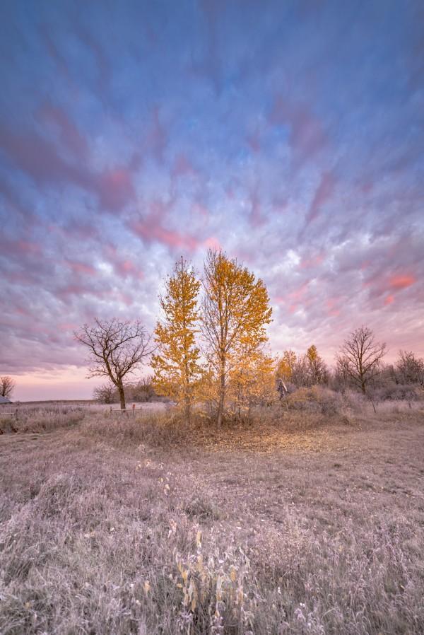 DSC_0723 3 by Brent Mckean