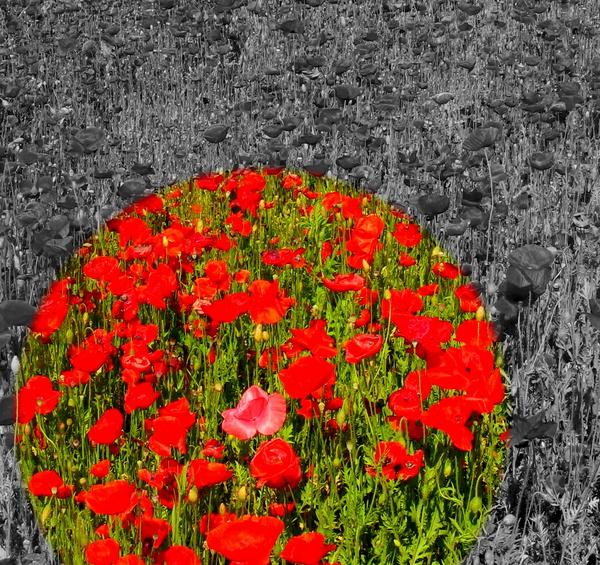 Poppy Popper Popping by Brett Noel