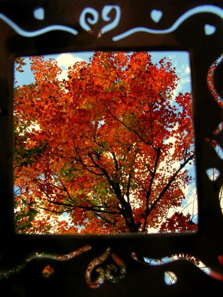 Singing Fall Tree by Brett Noel